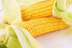 Corn cobs. Isolated on gray background Royalty Free Stock Photo