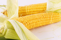 Corn cobs. Isolated on gray background Royalty Free Stock Images