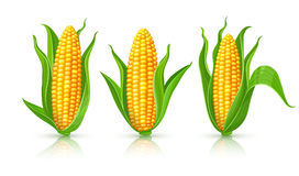 Corn cobs isolated set Royalty Free Stock Image