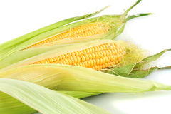 Corn cobs. Isolated on white background Stock Photo