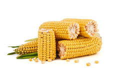Corn cobs. With leaves and separate the grains isolated on a white background Royalty Free Stock Photo