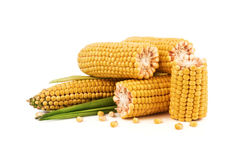 Corn cobs. With leaves and separate the grains isolated on a white background Royalty Free Stock Photography