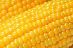 Corn cobs macro Royalty Free Stock Images