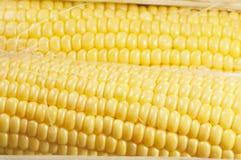 Corn cobs (maize) Stock Photos