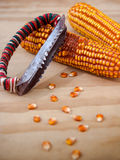 Corn cobs with manual hand tool to clean maize on wooden backgro Royalty Free Stock Image