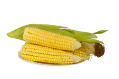 Corn cobs plate isolated on white Royalty Free Stock Photos