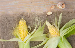 Corn cobs on a sackcloth Royalty Free Stock Photos
