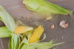 Corn cobs on a sackcloth Stock Image