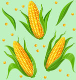 Corn cobs seamless pattern Stock Images