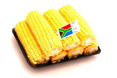 Corn cobs from South Africa Stock Image