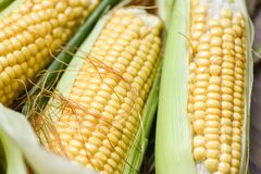 Corn on cobs and sweet corn ears background close up stock photography