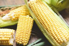Corn on cobs and sweet corn ears on wooden background. Close up royalty free stock photo