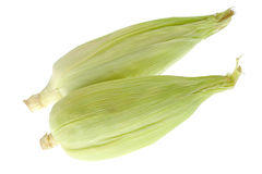 Corn Cobs on White Royalty Free Stock Image