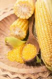 Corn cobs on white background. Royalty Free Stock Photography