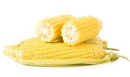 Corn cobs on white background. Stock Photography