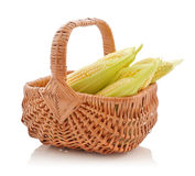 Corn cobs in wicker basket Stock Image