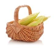 Corn cobs in wicker basket Stock Image