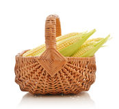 Corn cobs in wicker basket Stock Images