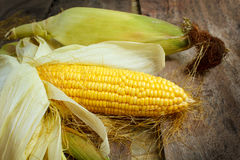 Corn cobs on wood background. Stock Photo
