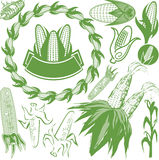 Corn Collection Royalty Free Stock Images