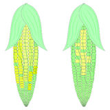 Corn vector color Stock Image