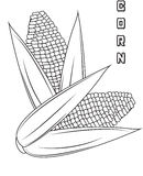 Corn coloring page Stock Photos