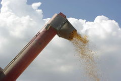 Corn Combine. Kernels of corn shooting out of the arm of a combine Royalty Free Stock Image