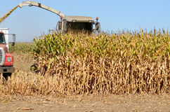 Corn Combine Royalty Free Stock Photo