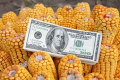 Corn concept Royalty Free Stock Image