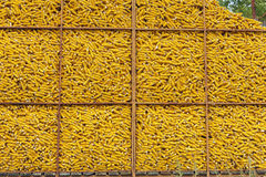 Corn container. Corn Crib: A wire mesh corn storage bin is filled to the top after fall harvest Stock Images