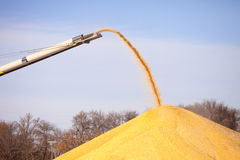Corn conveyor Stock Photography