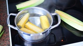 Corn cooked in a pot on stove. timelapse stock video footage
