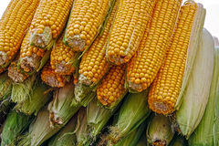 Corn for cooking Royalty Free Stock Photography