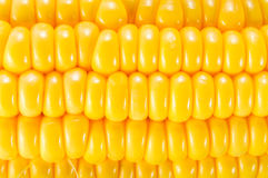 Corn, corn background Royalty Free Stock Image