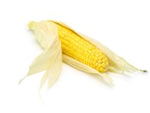 Corn with corn husk isolated on white Stock Photography