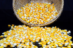 Corn and corn seeds in a Basket on black background. Stock Images