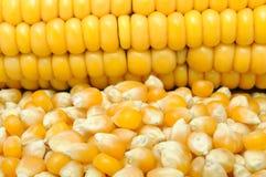 Corn And Corncob Royalty Free Stock Photo