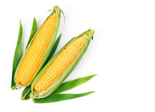 Corn corncob with green leaves ripe vegetables Stock Image