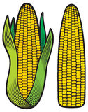 Corn. Cob with green leaves,  vector illustration Royalty Free Stock Image