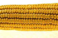 Corn Corncob Royalty Free Stock Photos