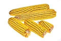 Corn Corncob Royalty Free Stock Image