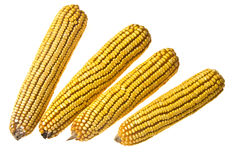 Corn Corncob Royalty Free Stock Images