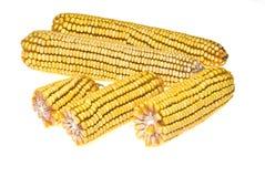 Corn Corncob Stock Photos