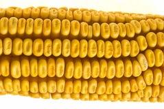 Corn Corncob Stock Images