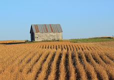 Corn Crib and Bean Field. An old unused corn crib in a bean field royalty free stock photo