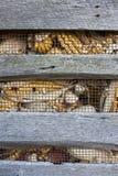 Corn crib Stock Photos
