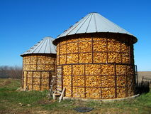 Corn Cribs. Unshelled corn harvest, stored in wire bins stock photos