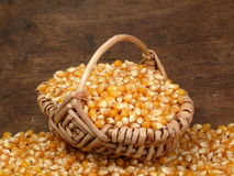 Corn crop stock images