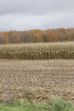 Corn Crop Stock Photography