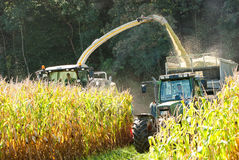 Corn crop being brought in. A tractor loads this year's corn crop into a trailer as fall approaches Royalty Free Stock Photos